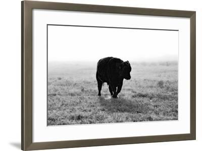 Bull after Ice Storm-Amanda Lee Smith-Framed Photographic Print