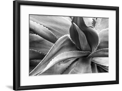 Agave Americana-Moises Levy-Framed Photographic Print