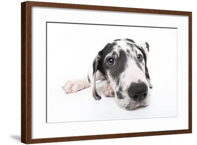 Puppies 025-Andrea Mascitti-Framed Photographic Print