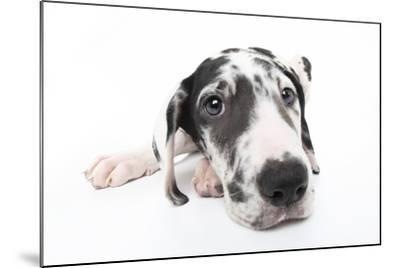 Puppies 025-Andrea Mascitti-Mounted Photographic Print