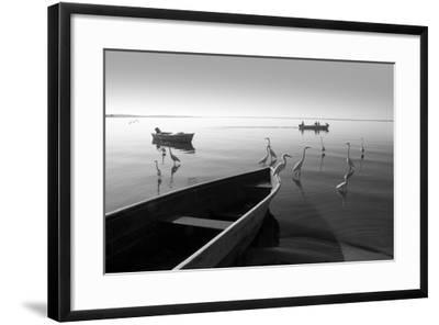 Herons and 3 Boats-Moises Levy-Framed Photographic Print