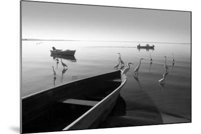Herons and 3 Boats-Moises Levy-Mounted Photographic Print