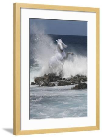 Spirit of the Sea-Bob Langrish-Framed Photographic Print
