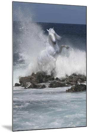 Spirit of the Sea-Bob Langrish-Mounted Photographic Print