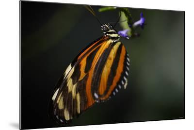 Butterfly-Gordon Semmens-Mounted Photographic Print