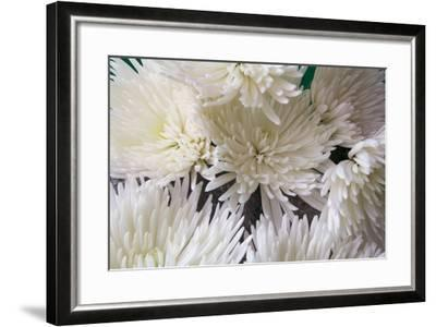 Blooming White-Bob Rouse-Framed Photographic Print