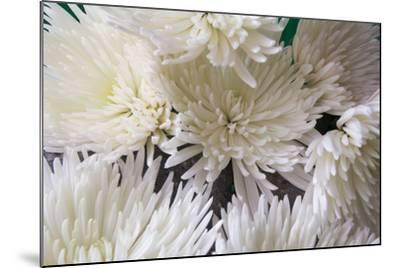 Blooming White-Bob Rouse-Mounted Photographic Print