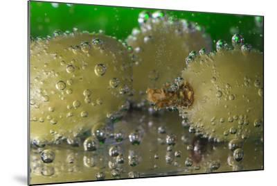 Grapes Underwater-Gordon Semmens-Mounted Photographic Print