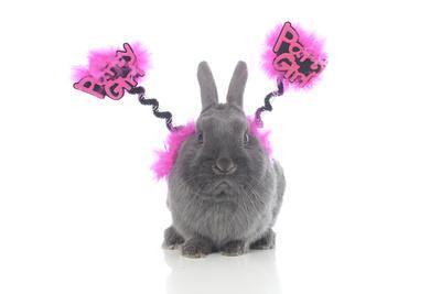 Rabbits 021-Andrea Mascitti-Framed Photographic Print