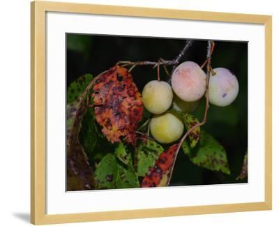 Shades of Nature 61-Gordon Semmens-Framed Photographic Print