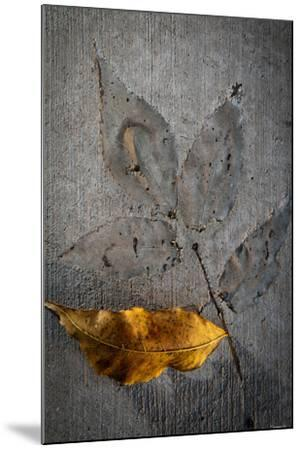 Cement Autumn 1295-Gordon Semmens-Mounted Photographic Print