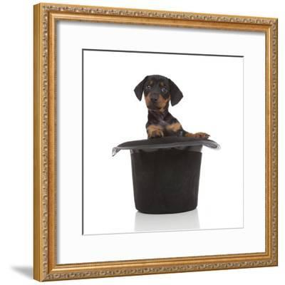 Puppies 053-Andrea Mascitti-Framed Photographic Print