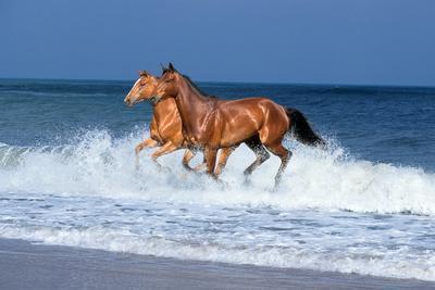 Horses Sea-Bob Langrish-Framed Photographic Print