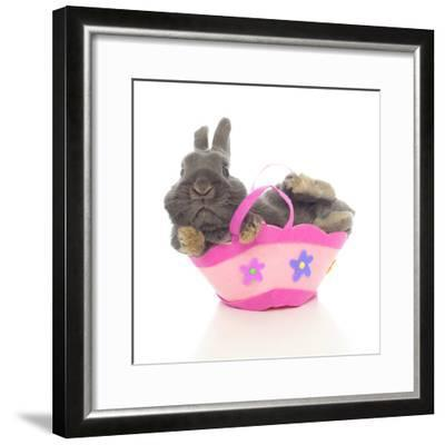 Rabbits 003-Andrea Mascitti-Framed Photographic Print