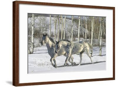 Winter Wonderland-Bob Langrish-Framed Photographic Print