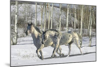 Winter Wonderland-Bob Langrish-Mounted Photographic Print