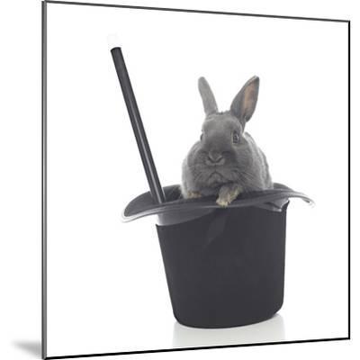 Rabbits 002-Andrea Mascitti-Mounted Photographic Print