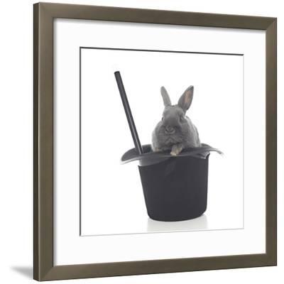 Rabbits 002-Andrea Mascitti-Framed Photographic Print