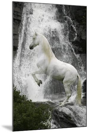 Water Nymph-Bob Langrish-Mounted Photographic Print