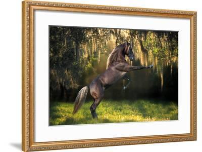 Warrior Prince-Bob Langrish-Framed Photographic Print