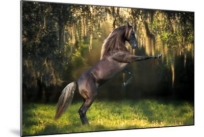 Warrior Prince-Bob Langrish-Mounted Photographic Print