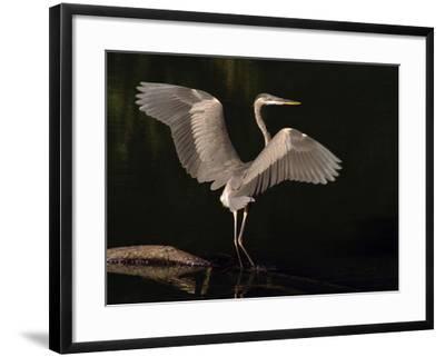 Big Bird-J.D. Mcfarlan-Framed Photographic Print