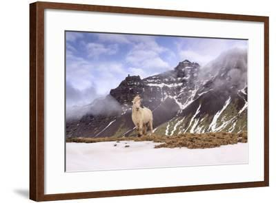 You Looking at Me-Michael Blanchette-Framed Photographic Print