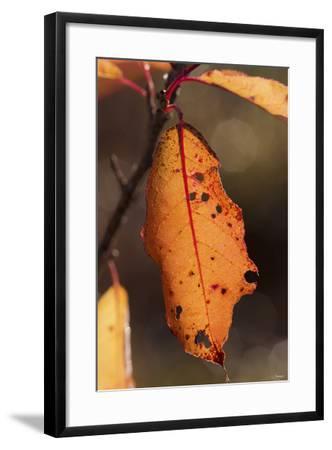 Leaf-Gordon Semmens-Framed Photographic Print