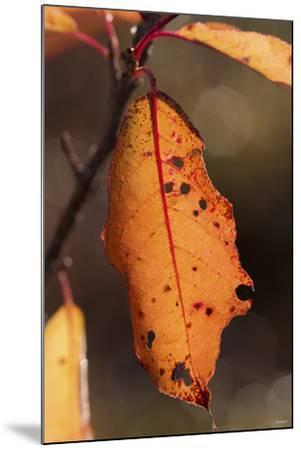 Leaf-Gordon Semmens-Mounted Photographic Print