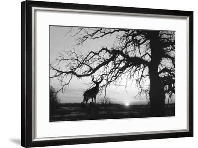 Silhouette 2-Gordon Semmens-Framed Photographic Print