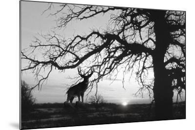 Silhouette 2-Gordon Semmens-Mounted Photographic Print