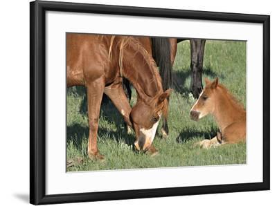 Wildhorses-Gordon Semmens-Framed Photographic Print