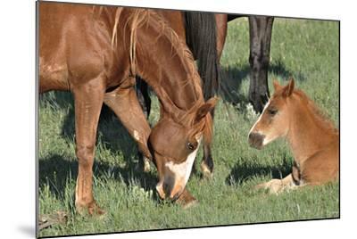 Wildhorses-Gordon Semmens-Mounted Photographic Print
