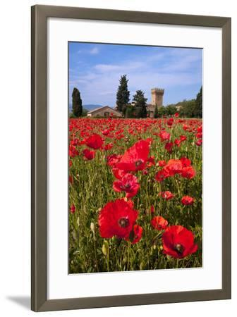 Poppies Close and Personal-Michael Blanchette-Framed Photographic Print