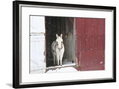 Winter-Jeff Rasche-Framed Photographic Print
