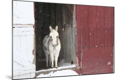 Winter-Jeff Rasche-Mounted Photographic Print