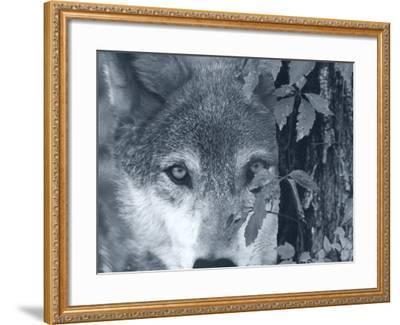 At First Sight-Gordon Semmens-Framed Photographic Print