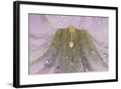 North Shore-Gordon Semmens-Framed Photographic Print