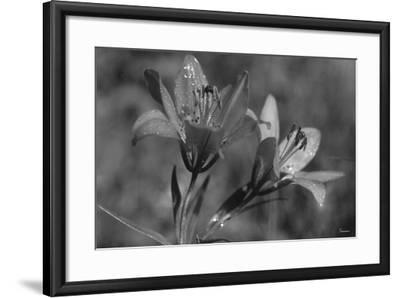 Wildflowers 3-Gordon Semmens-Framed Photographic Print
