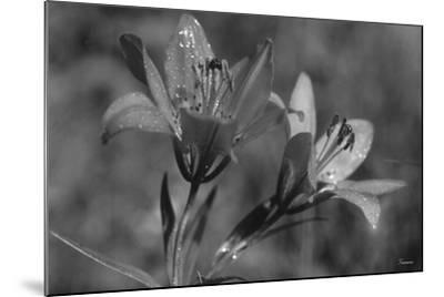 Wildflowers 3-Gordon Semmens-Mounted Photographic Print