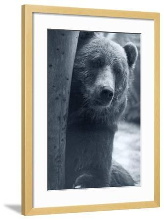 Grizzly-Gordon Semmens-Framed Photographic Print