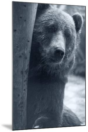 Grizzly-Gordon Semmens-Mounted Photographic Print