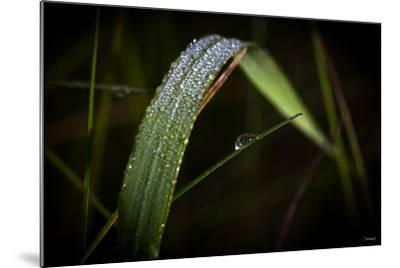 Blade of Grass with Dew Drops-Gordon Semmens-Mounted Photographic Print