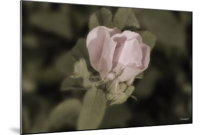 Flower-Gordon Semmens-Mounted Photographic Print