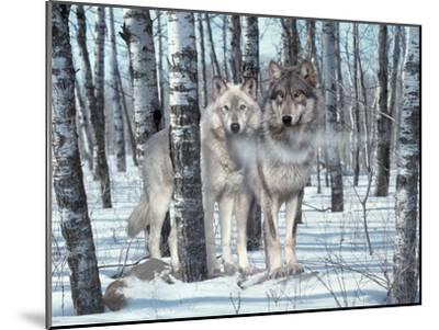 Snow Shadows-Gordon Semmens-Mounted Photographic Print