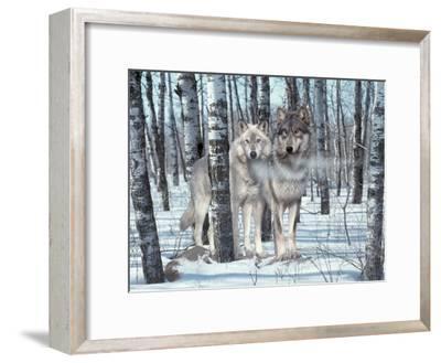 Snow Shadows-Gordon Semmens-Framed Photographic Print