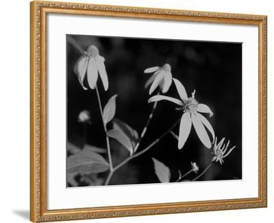 Wildflowers 10-Gordon Semmens-Framed Photographic Print