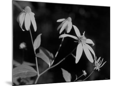 Wildflowers 10-Gordon Semmens-Mounted Photographic Print