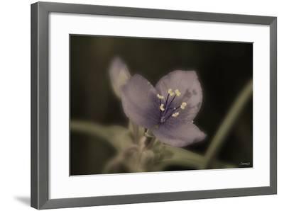 Flower-Gordon Semmens-Framed Photographic Print