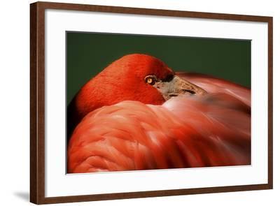 Just a Peek-Harold Silverman-Framed Photographic Print